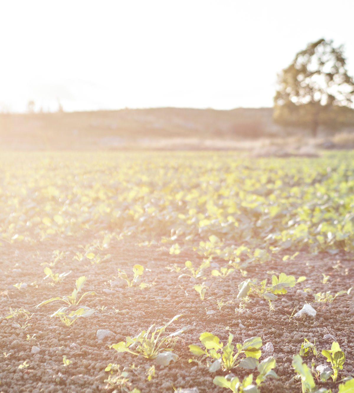Miljö, hållbarhet och smarta val på UKK