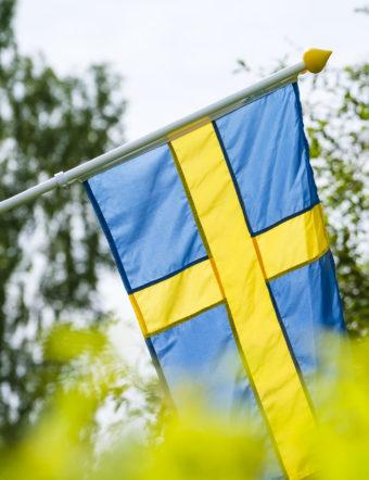 Svenska flaggan bakom grönskande buskar